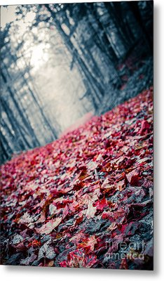Red Carpet Metal Print by Edward Fielding