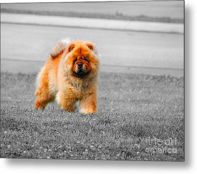 Red Chow Metal Print by Jai Johnson