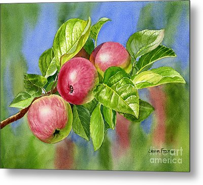 Red Cider Apples With Background Metal Print by Sharon Freeman