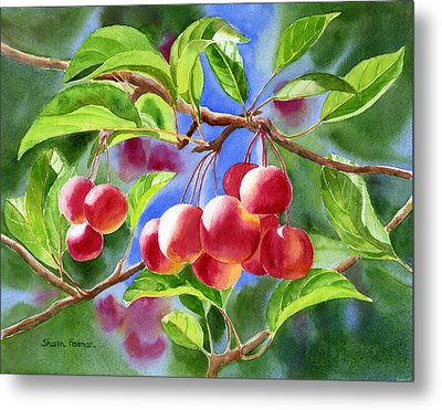 Red Crab Apples With Background Metal Print by Sharon Freeman