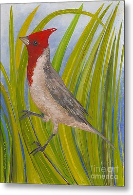 Red-crested Cardinal Metal Print by Anna Skaradzinska