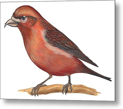 Red Crossbill Metal Print by Anonymous