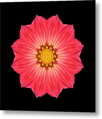 Red Dahlia Hybrid I Flower Mandala Metal Print by David J Bookbinder