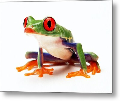 Red-eye Tree Frog 1 Metal Print by Lanjee Chee