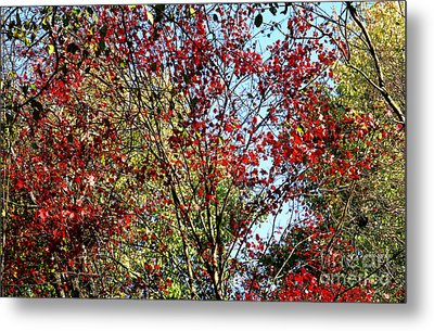 Red Fall Foliage Metal Print by Tina M Wenger