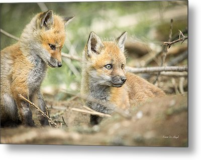 Red Fox Kits Metal Print by Everet Regal