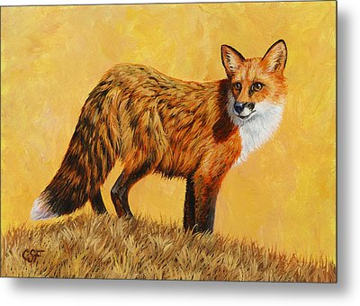 Red Fox Painting - Looking Back Metal Print by Crista Forest