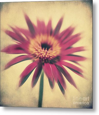 Red Gerbera Metal Print by Angela Doelling AD DESIGN Photo and PhotoArt