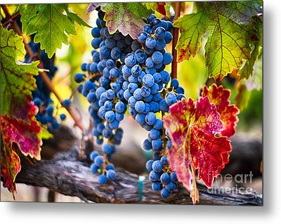 Blue Grapes On The Vine Metal Print by George Oze