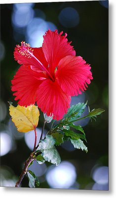 Red Hibiscus Flower Metal Print by Michelle Wrighton