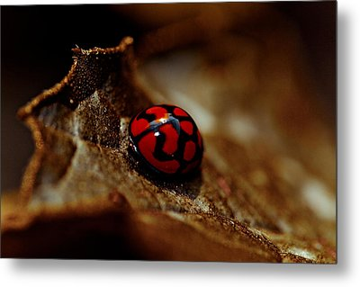 Red Lady Bug Metal Print by Isabel Laurent