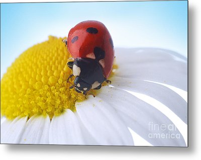 Red Ladybug Metal Print by Boon Mee