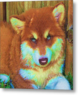 Red Malamute Metal Print by Jane Schnetlage