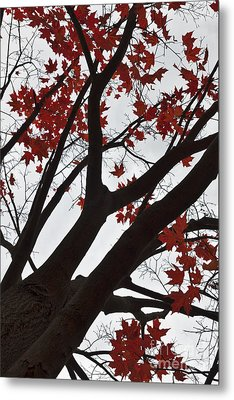Red Maple Tree Metal Print by Ana V  Ramirez