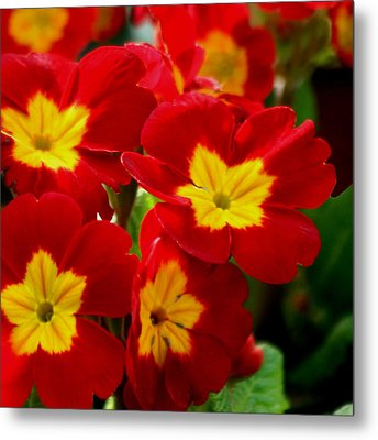 Red Primroses Metal Print by Art Block Collections