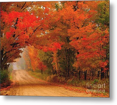 Red Red Autumn Metal Print by Terri Gostola