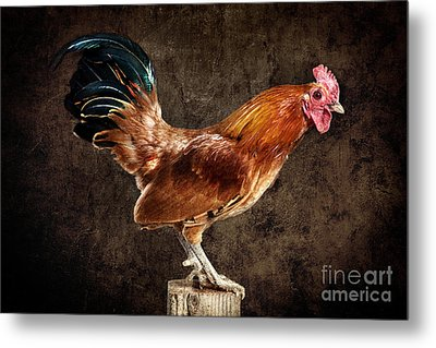 Red Rooster On Fence Post Metal Print by Cindy Singleton