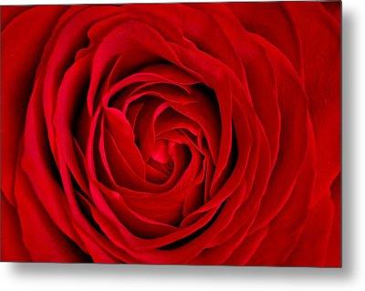 Red Rose Metal Print by Aqnus Febriyant