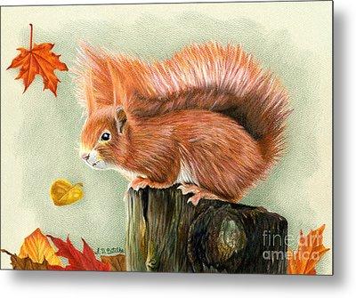 Red Squirrel In Autumn Metal Print by Sarah Batalka