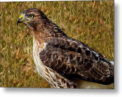 Red Tailed Hawk Close Up Metal Print by John Absher