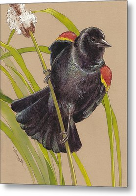 Red Winged Blackbird 1 Metal Print by Tracie Thompson
