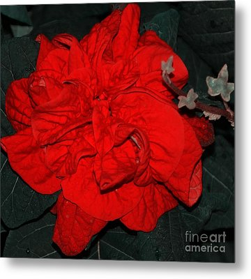 Red Winter Rose Metal Print by Kathleen Struckle