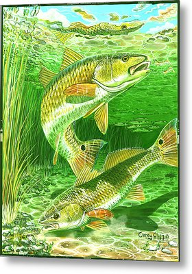 Redfish Haven In0018 Metal Print by Carey Chen