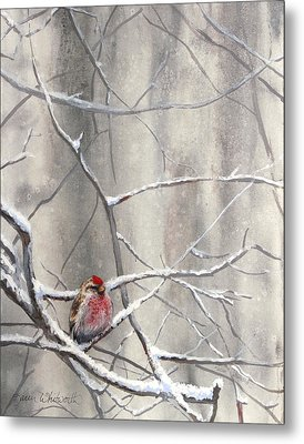 Redpoll Eyeing The Feeder - 1 Metal Print by Karen Whitworth