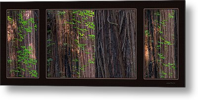 Redwood Texture Triptych Metal Print by Leland D Howard