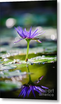 Reflection Of Life Metal Print by Charles Dobbs