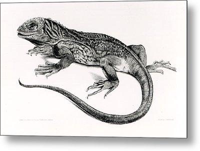 Reptile Metal Print by English School