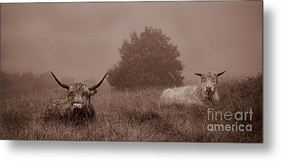 Resting Beasts Metal Print by Linsey Williams