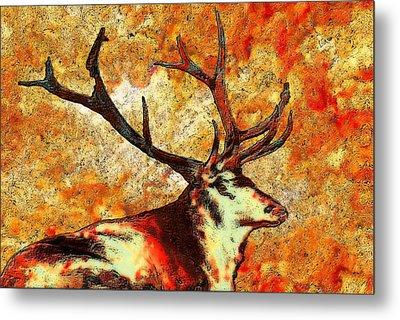 Resting Elk Metal Print by Jack Zulli