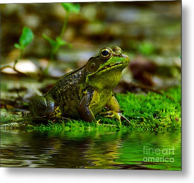 Resting In The Shade Metal Print by Kathy Baccari