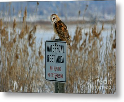 Resting Owl Metal Print by Marty Fancy