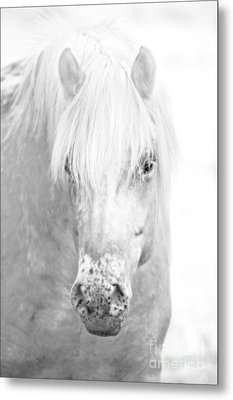 Revelation... Metal Print by Nina Stavlund