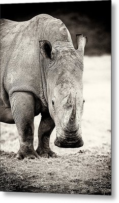 Rhino After The Rain Metal Print by Mike Gaudaur