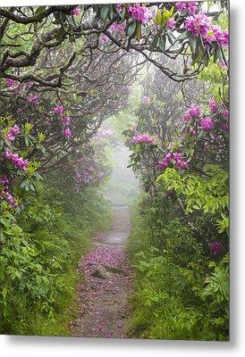 Rhododendron Time In North Carolina Metal Print by Bill Swindaman