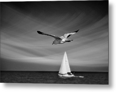 Ride The Wind Metal Print by Laura Fasulo