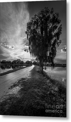 Road Into The Light-bw Metal Print by Marvin Spates