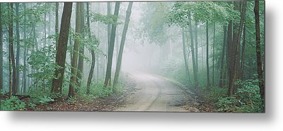 Road Passing Through A Forest, Skyline Metal Print by Panoramic Images