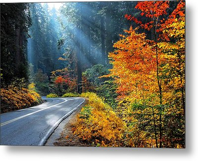 Road To Glory  Metal Print by Lynn Bauer