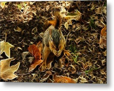 Robbie The Squirrel - 5173 F Metal Print by James Ahn