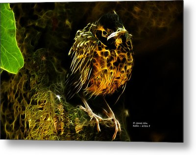 Robin - 6386 F Metal Print by James Ahn