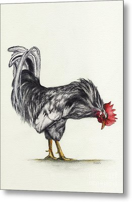Rooster Metal Print by Nan Wright