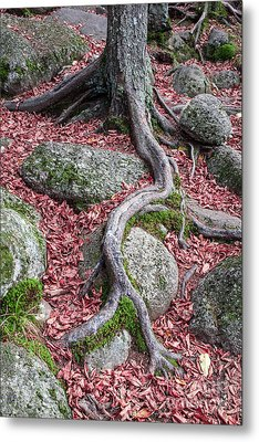 Roots Metal Print by Edward Fielding