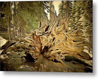 Roots Of A Fallen Giant Sequoia Metal Print by Barbara Snyder
