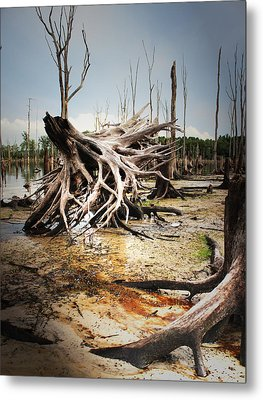 Roots Of Beauty Metal Print by  Tina McGinley