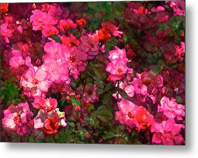 Rose 202 Metal Print by Pamela Cooper