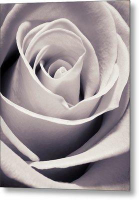 Rose Metal Print by Adam Romanowicz